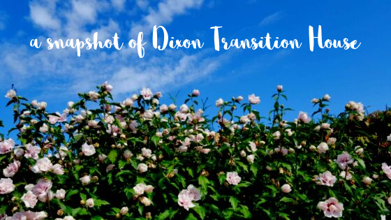 "Text reading ""a snapshot of Dixon Transition House"" on a photo of a flower bush against a blue sky"